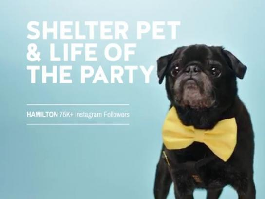 Humane Society of United States Film Ad -  Hamilton