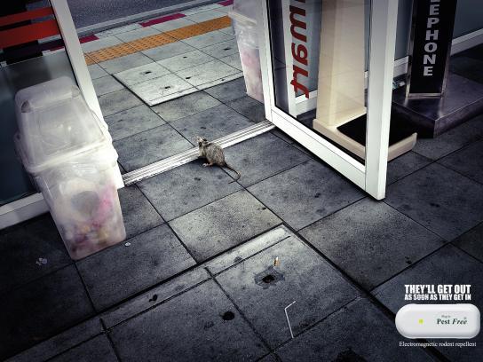 Pest Free Print Ad -  Minimart