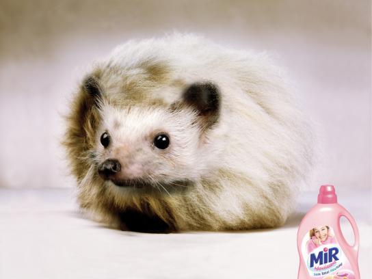 MIR Print Ad -  Hedgehog
