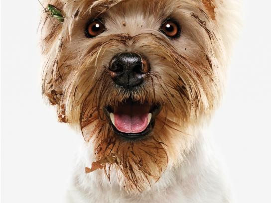 Mitsubishi Print Ad -  Dogs, 1