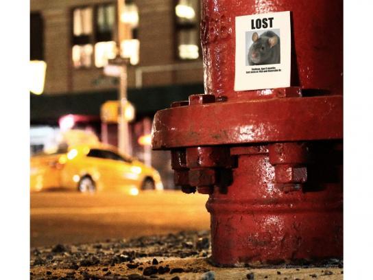 d-CON Print Ad -  Lost