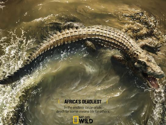 National Geographic Print Ad - Africa's Deadliest - Crocodile X Wildebeest