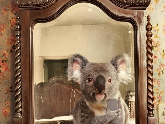 Diomedia Print Ad -  Koala
