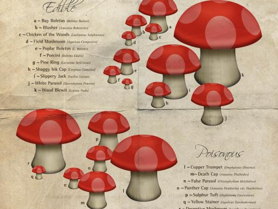 National Geographic Outdoor Ad -  Mushrooms