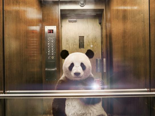Diomedia Print Ad -  Panda
