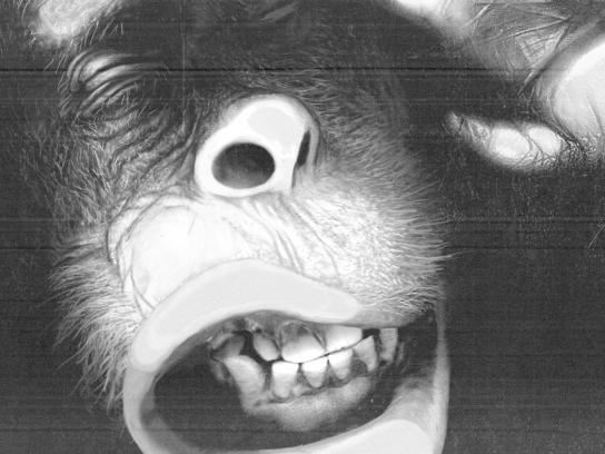WWF Print Ad -  Orangutan