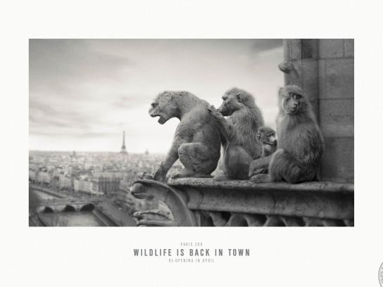 Paris Zoo Print Ad -  Wildlife is back in town, 1