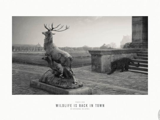 Paris Zoo Print Ad -  Wildlife is back in town, 4