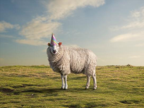 World Meat Free Day Print Ad - Party sheep