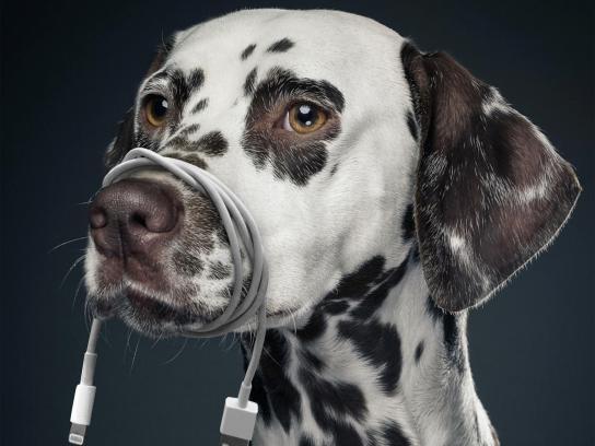 Pedigree Print Ad - Free Your Dog, 1
