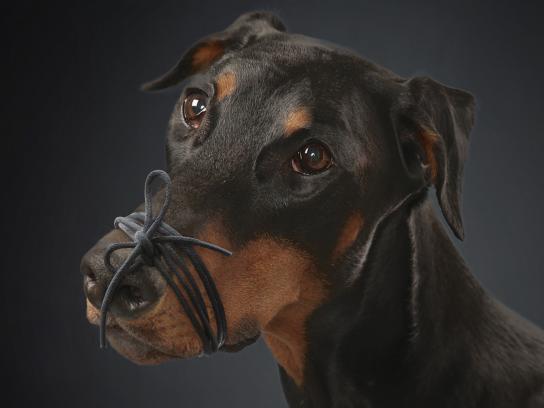 Pedigree Print Ad - Free Your Dog, 2