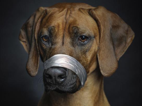Pedigree Print Ad - Free Your Dog, 3