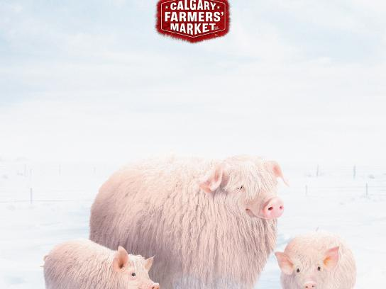 Calgary Farmers' Market Outdoor Ad -  Pigs