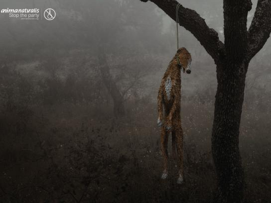 AnimaNaturalis Print Ad - Greyhound