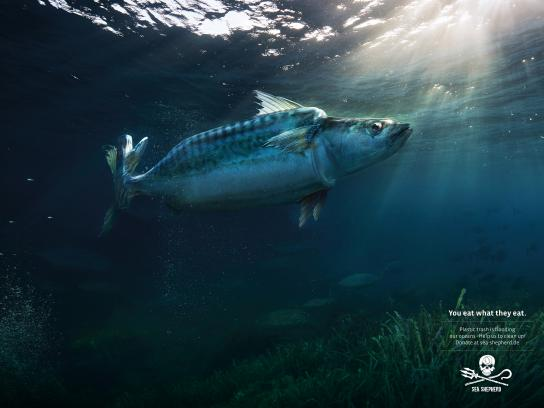 Sea Shepherd Print Ad - Mackarel