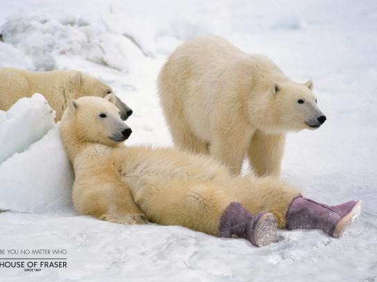 House of Fraser Print Ad -  Polar Bear