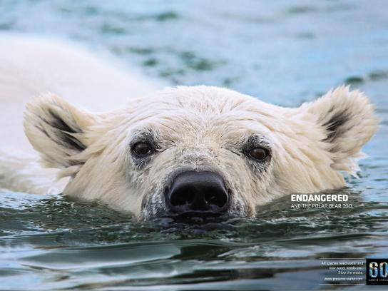 Earth Hour Print Ad -  Polar bear