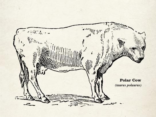 Hyundai Print Ad - Polar Cow