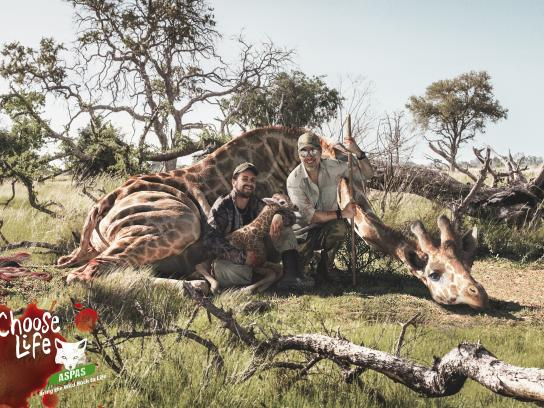 ASPAS Print Ad - Giraffe