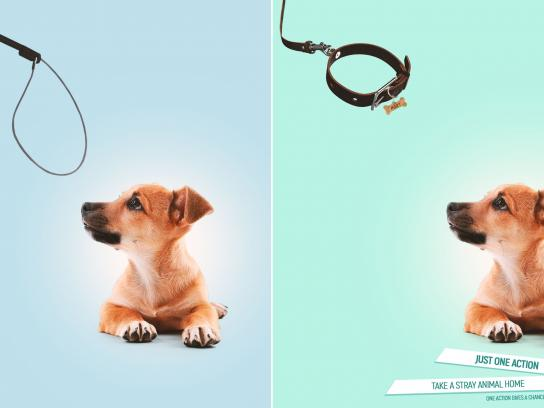 Novy Shans Print Ad - Shelter for homeless animals, 1