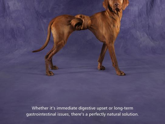 Protexin Print Ad -  Twisted Vizsla