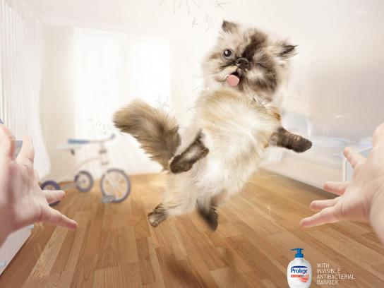 Protex Print Ad -  Cat