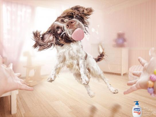 Protex Print Ad -  Dog