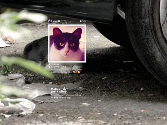 Dallas Pets Alive Print Ad -  Petstagram, #prrrprrrprrr