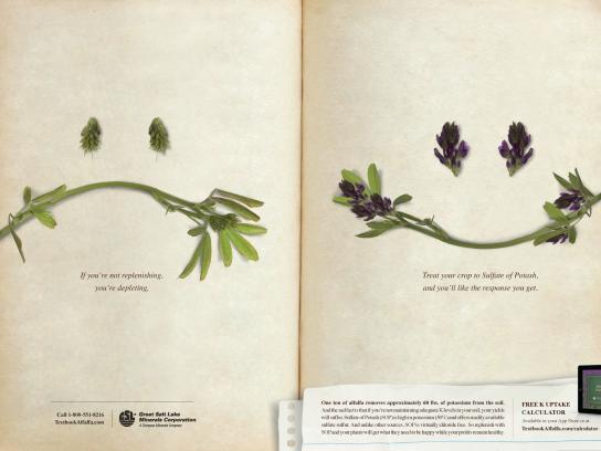 Great Salt Lake Minerals Corporation Print Ad -  Alfalfa