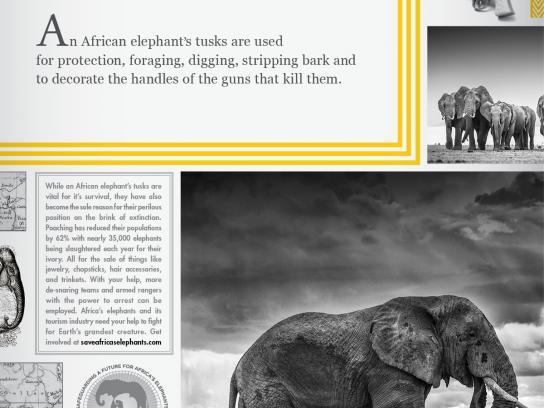 S.A.F.E. Print Ad -  Tusks