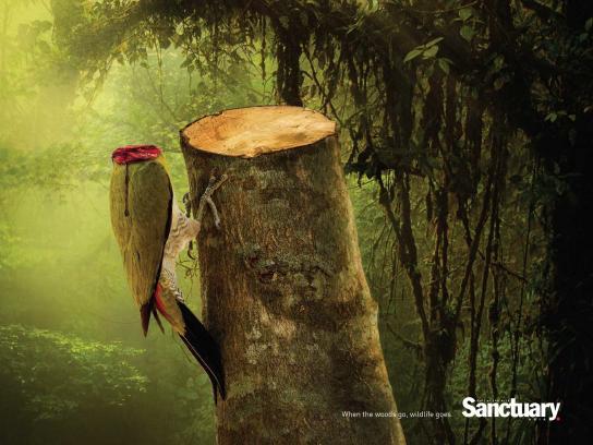 Sanctuary India Print Ad -  Wildlife, 4