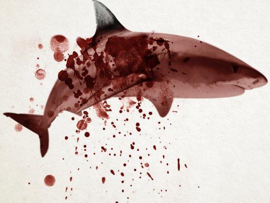 Sea Shepherd Print Ad -  Ocean's wings, 2