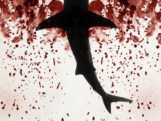 Sea Shepherd Print Ad -  Ocean's wings, 3