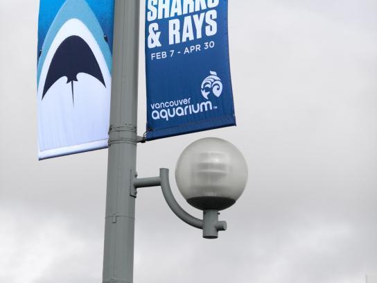 Vancouver Aquarium Outdoor Ad -  Banner