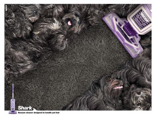 Shark Print Ad - Pet hair