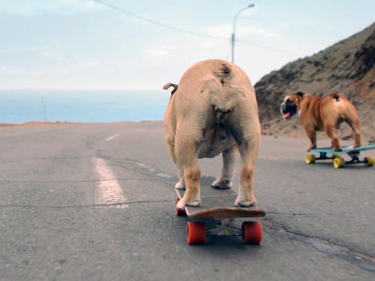 Verum Film Ad - Skateboarding dogs