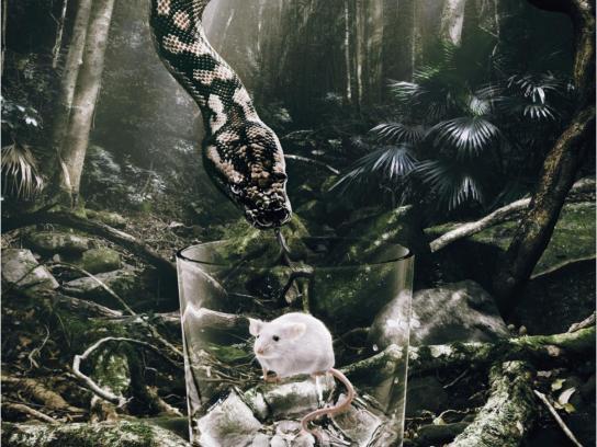 Diageo Print Ad -  Snake