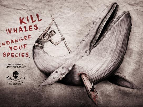 Sea Shepherd Print Ad - Whale