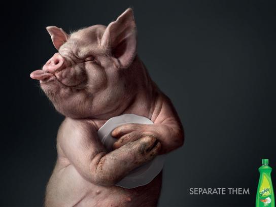 Sunlight Print Ad -  Pig