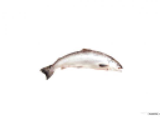 Tramontina Print Ad -  Fish