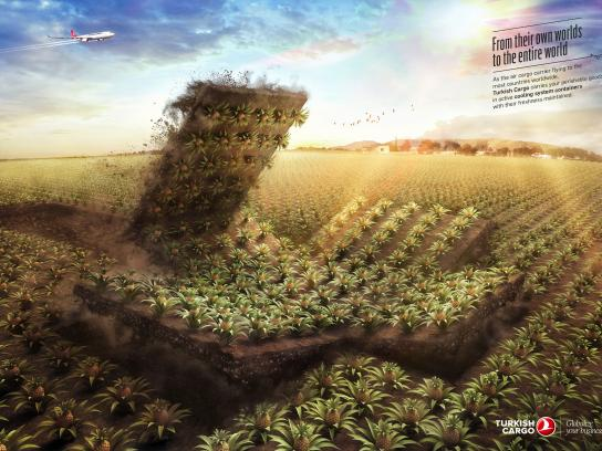 Turkish Cargo Print Ad - Pineapple