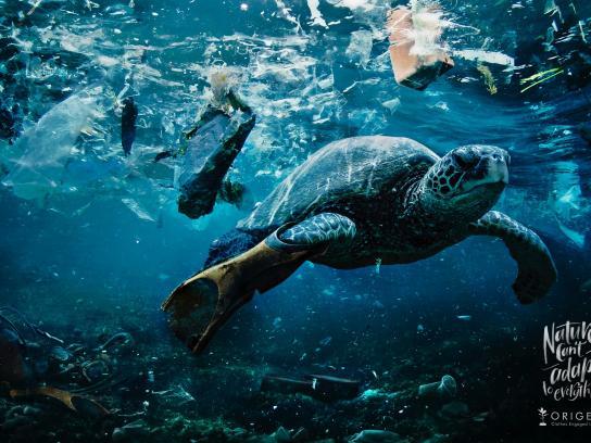 Origens Print Ad - Turtle