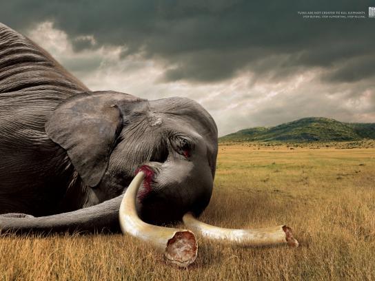 Wildlife Friend Foundation Thailand Print Ad -  Tusks