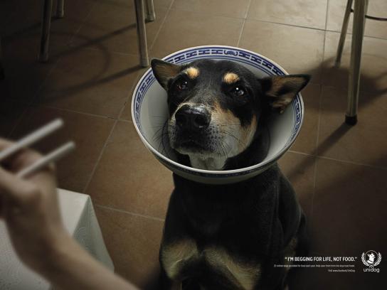 UniDog Print Ad -  Dog, 2