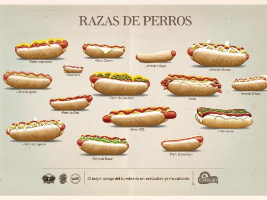 Catalan Print Ad -  Dog breeds