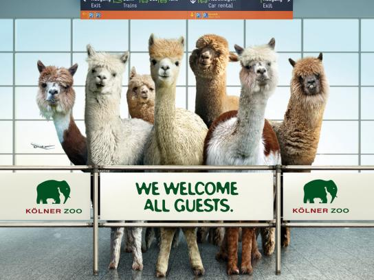 Zoo Cologne Outdoor Ad -  Alpaca