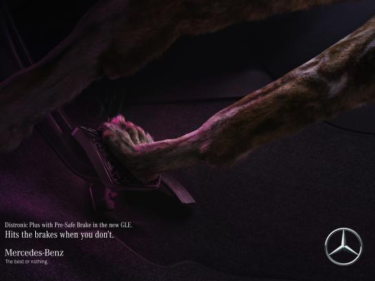 Mercedes Print Ad - Wild dog saves wild dog
