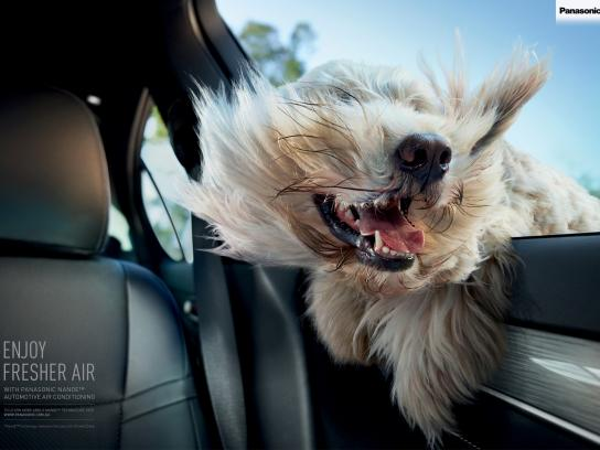 Panasonic Outdoor Ad -  Windblown dog