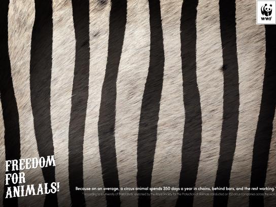 WWF Outdoor Ad - Zebra