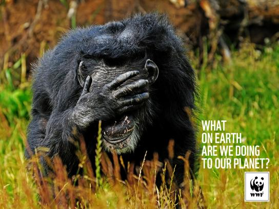 WWF Print Ad -  Chimpanse